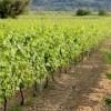 Kameni Dvori Vineyards & Wine Production, Croatia