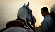 Konavle Horse riding dawn