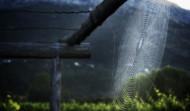 Kameni Dvori Konavle dawn spider web