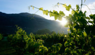 Kameni Dvori Konavle vineyard sunrise