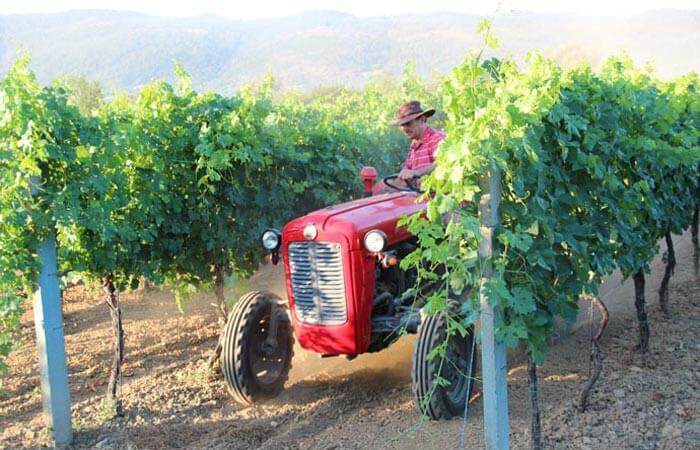 Dubrovnik Grape Picking Tractor