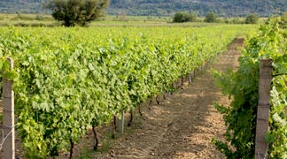 Dubrovnik Konavle Wine Route Tours - Vineyards