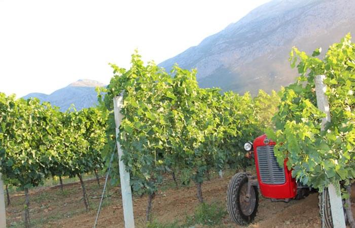 Konavle Vineyard works