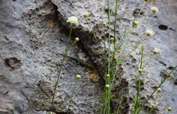 Kameni Dvori Plant
