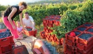 Holiday Home Rentals Dubrovnik - Kameni Dvori Farm Activities
