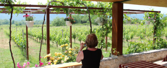 Konavle Wine Route Tours